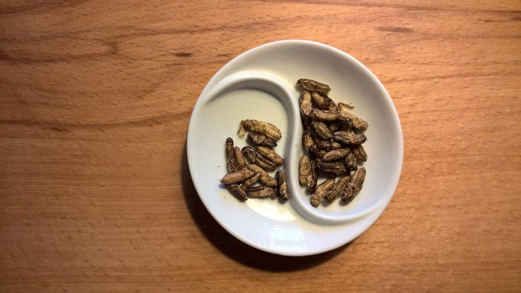 Meelwormen eten