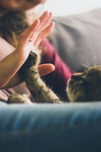 Huisdieren en welzijn